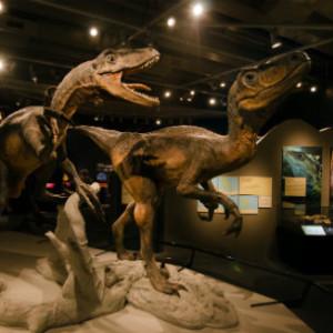 dinasaur replica in the museum