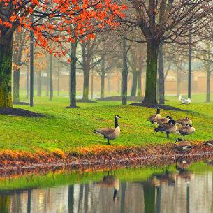 ducks beside the lake
