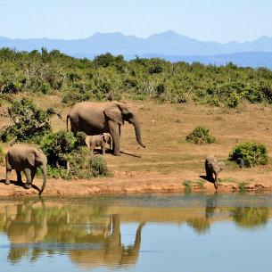Elephants beside the lake